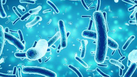 bacteria-sibo-small-intestine-madison-wi-small intestinal bacterial overgrowth