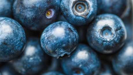 Intestinal glutahione susthesis - antioxidants